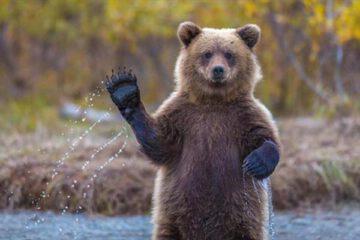 نجات دو توله خرس سرگردان از منطقه شکار ممنوع کوه خرسی مرودشت