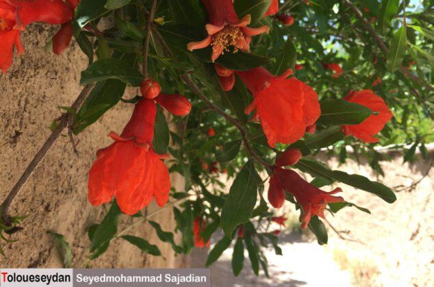 خودنمایی طبیعت زیبای سیدان