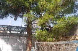 ماجرای قطع درخت در سیدان از داعیه تا واقعیت